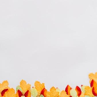 Feuilles d'automne sur une surface blanche