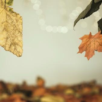 Feuilles d'automne suspendus sur la surface floue