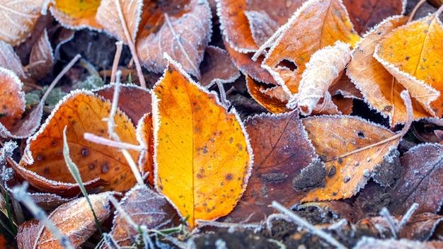Feuilles d'automne tombées couvertes de givre, les premières gelées, fond d'automne