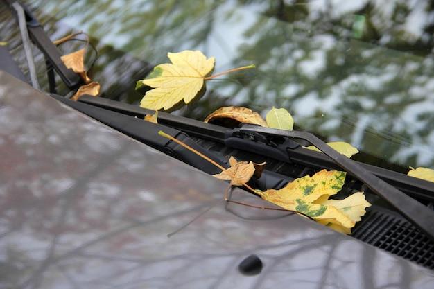 Les feuilles d'automne tombées sur le pare-brise et le capot de la voiture reflétant les branches d'arbres