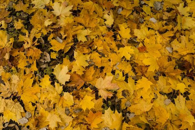 Feuilles d'automne tombées