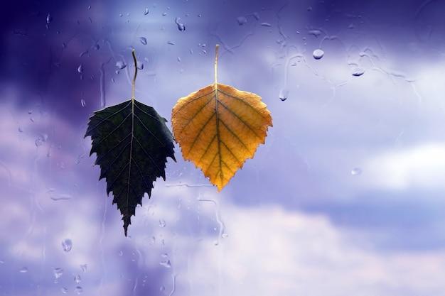 Feuilles d'automne sur verre humide par temps de pluie
