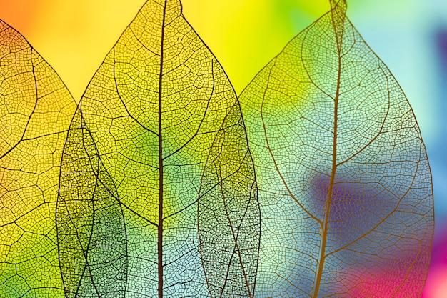 Feuilles d'automne vertes abstraites vives