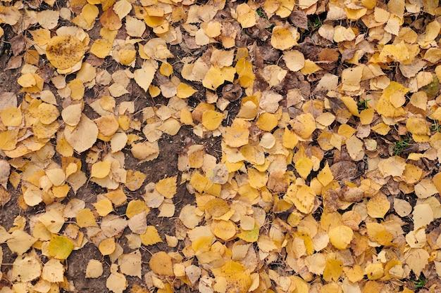 Feuilles d'automne, vue de dessus. feuillage tombé coloré. motif de fond de conception pour une utilisation saisonnière.
