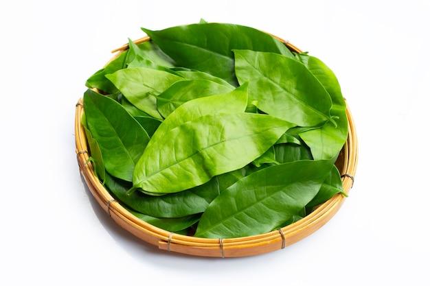 Feuilles de baegu ou melinjo dans un panier en bambou sur fond blanc.