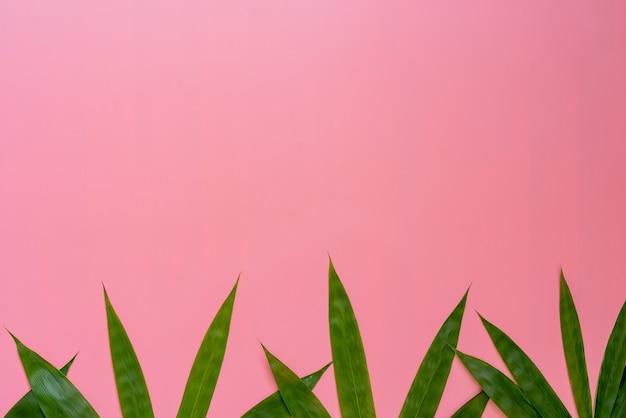 Feuilles de bambou frais isolés sur fond rose