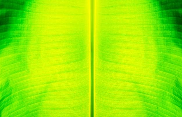 Feuilles de bananier feuilles vertes et fond de paillettes d'éclairage