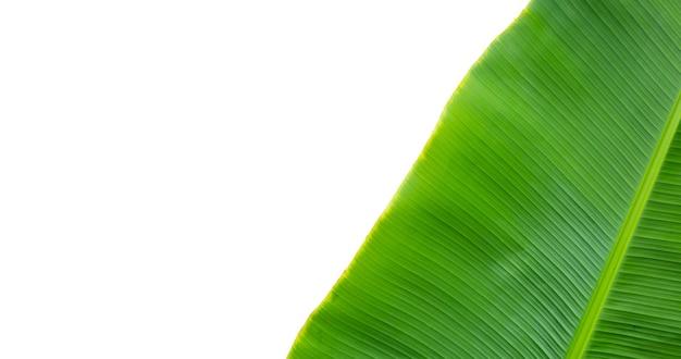 Feuilles de bananier sur fond blanc.
