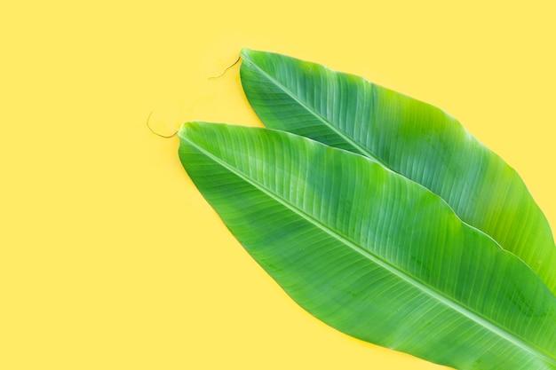 Feuilles de bananier fraîches sur fond jaune.