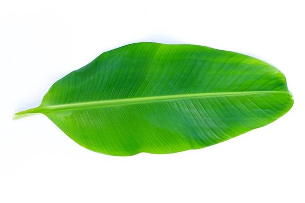 Feuilles de bananier sur une surface blanche