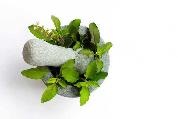 Feuilles de basilic sacré avec fleur en mortier de pierre et pilon sur fond blanc.