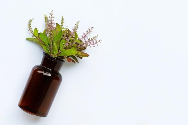 Feuilles de basilic sacré frais et fleur avec bouteille d'huile essentielle sur fond blanc.
