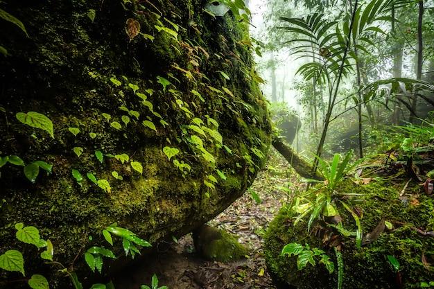 Feuilles de bégonia sur un rocher dans les bois