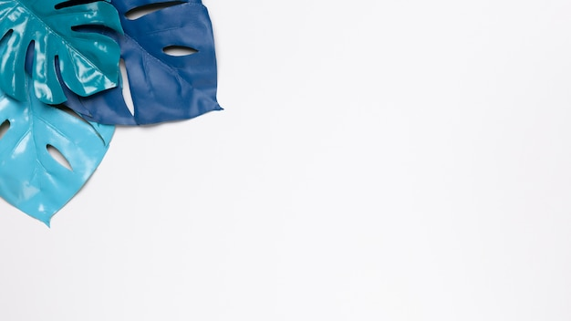 Feuilles bleues sur fond blanc avec espace de copie