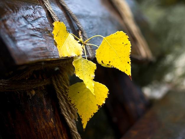 Feuilles de bouleau jaune sur un banc en bois dans le parc