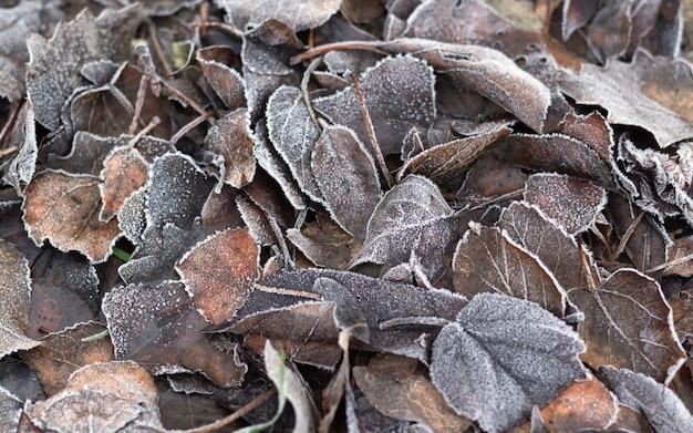 Feuilles brunes sèches givrées, fond nature.