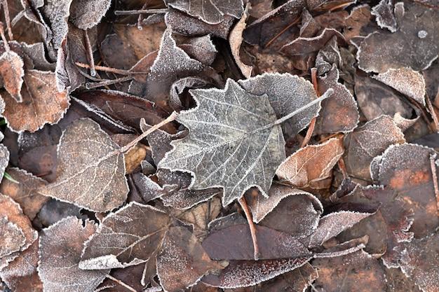 Feuilles brunes sèches givrées, fond de texture automne.
