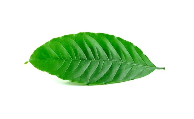 Feuilles de café vert frais isolés sur blanc