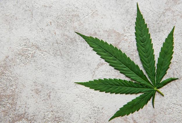 Feuilles de cannabis vert sur fond de béton. culture de marijuana médicale. concept de médecine alternative à base de plantes