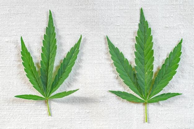 Feuilles de cannabis sur une vieille toile de chanvre