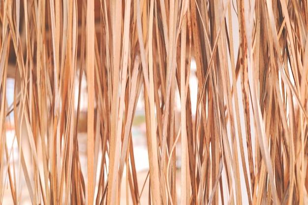 Feuilles de canne tropicales suspendues verticales sèches comme arrière-plan.