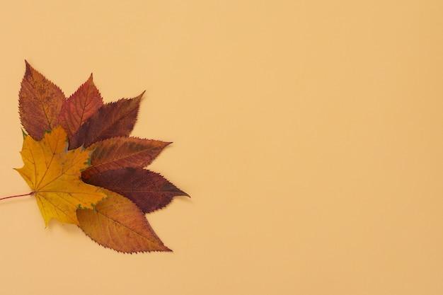 Feuilles de cerisier et d'érable tombées sur mur jaune, concept d'automne, mise à plat, vue de dessus, espace de copie
