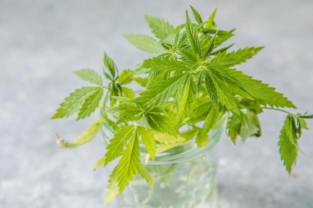 Feuilles de chanvre médicinal dans un flacon compte-gouttes en verre avec du chanvre cbd. concept de cannabis médical