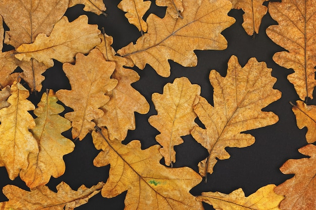 Feuilles de chêne d'automne sur fond noir