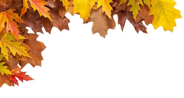 Feuilles de chêne et d'érable automne isolés