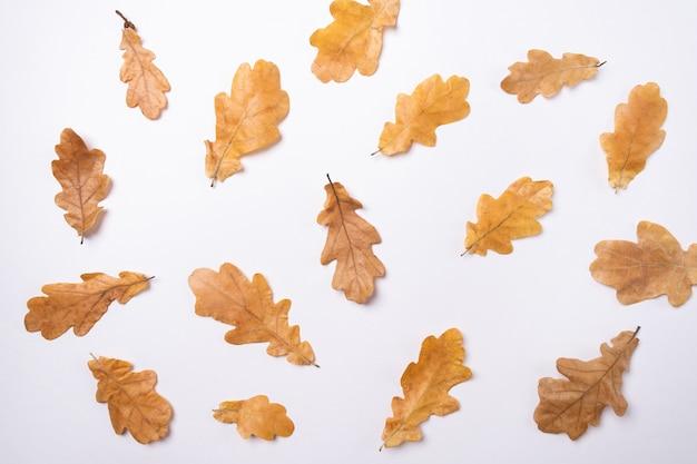 Feuilles de chêne jaune sur blanc