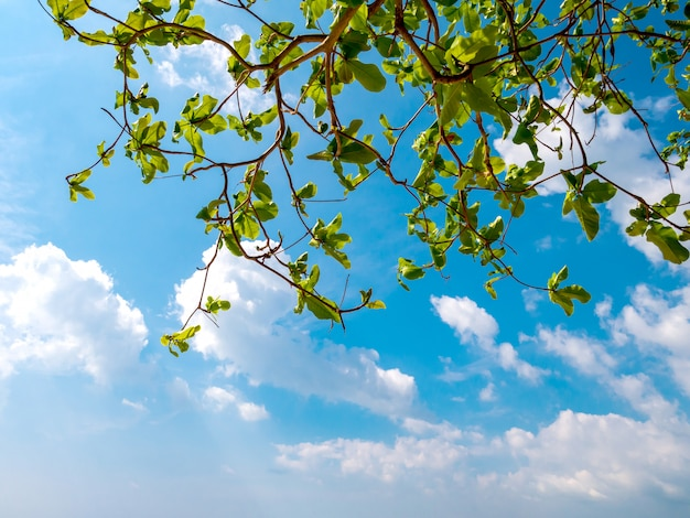 Feuilles et ciel bleu