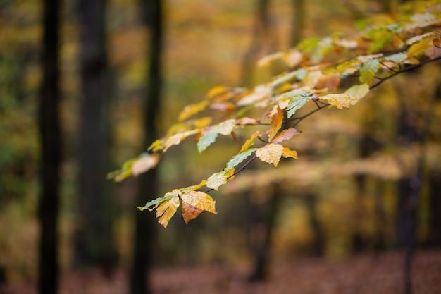 Feuilles colorées accrochées à un arbre en automne axé sur la nature