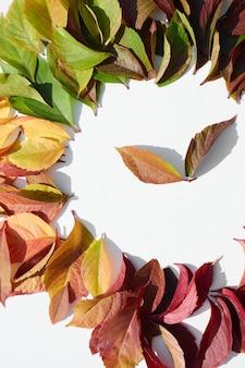 Feuilles colorées dans un cercle sur fond blanc isolé. feuilles d'automne. composition d'automne.