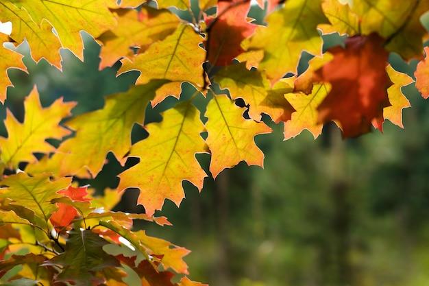Feuilles colorées dans la forêt d'automne.