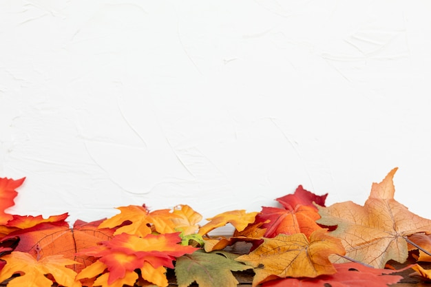Feuilles colorées avec un fond blanc