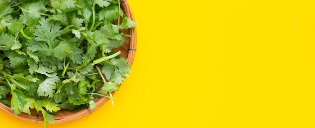 Feuilles de coriandre fraîche dans un panier en bambou sur fond jaune.
