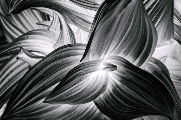 Feuilles courbées abstrait texture fond noir et blanc