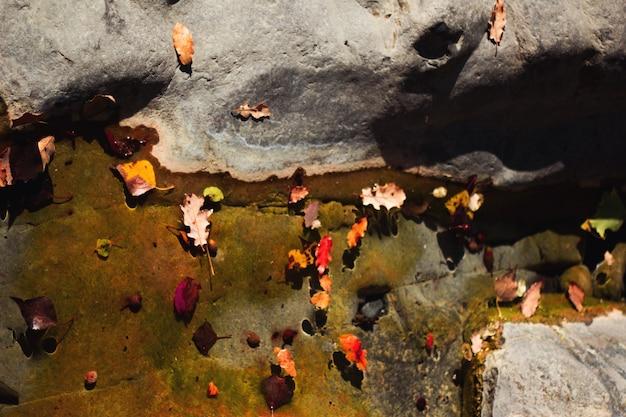 Les feuilles dans l'eau