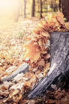 Feuilles d'érable sur un arbre coupé.