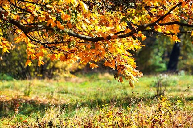 Feuilles d'érable d'automne sur une branche au-dessus d'un pré