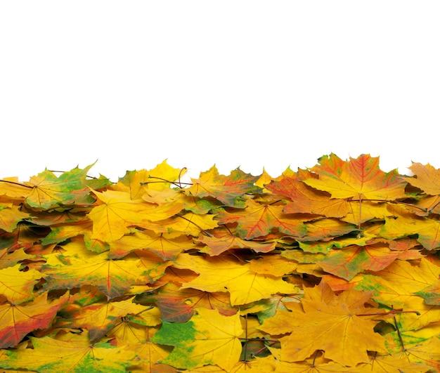 Feuilles d'érable d'automne isolés sur fond blanc