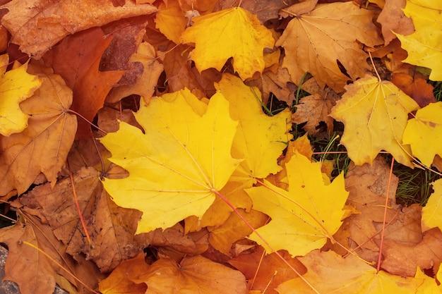 Feuilles d'érable d'automne photos d'arrière-plan mi automne
