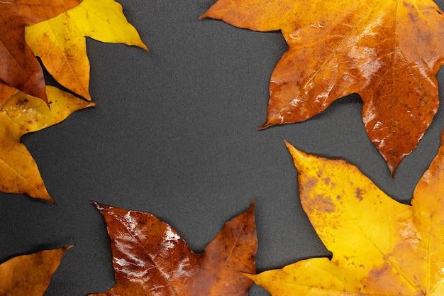 Feuilles d'érable d'automne photos d'arrière-plan