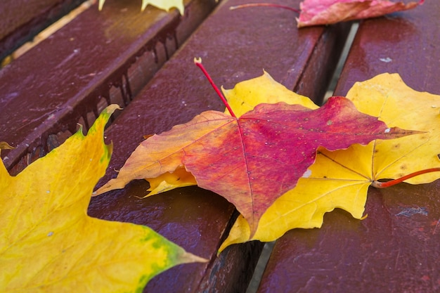 Feuilles d'érable jaune et rouge sur un banc de parc journée chaude ensoleillée automne fond