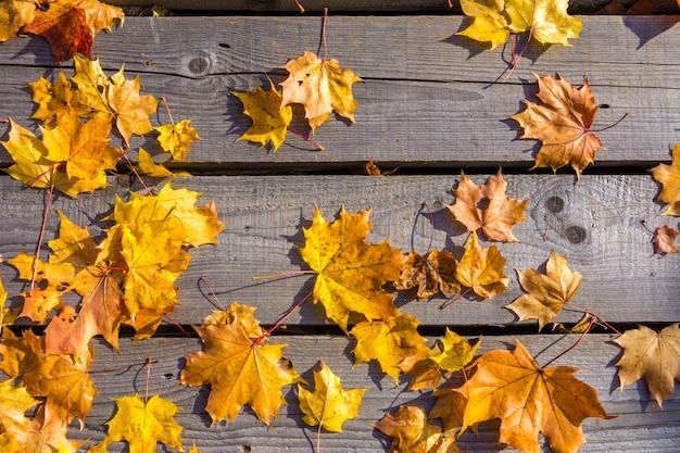 Les feuilles d'érable jaunes d'automne se trouvent sur le vieux plancher en bois non peint.