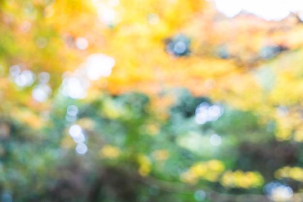 Feuilles d'érable rouge floues qui fleurissent à arashiyama