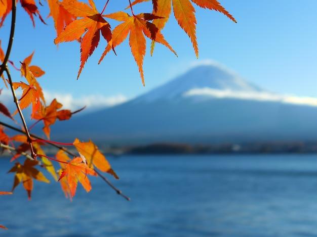 Feuilles d'érable rouge et jaune sur fond de montagne fuji, lac kawaguchiko, japon
