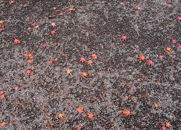 Feuilles d'érable rouge sur le sol à l'automne au japon