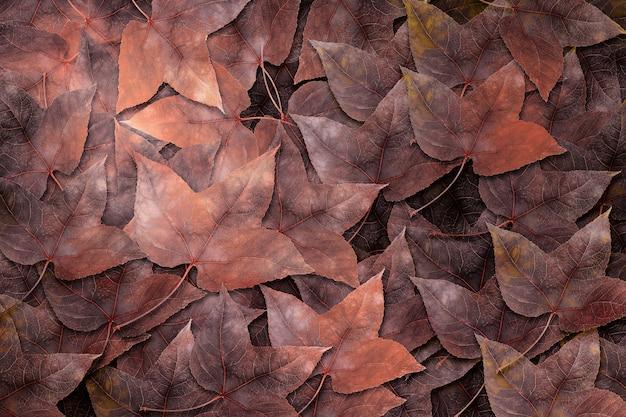 Feuilles d'érable séchées sur fond de feuilles d'érable