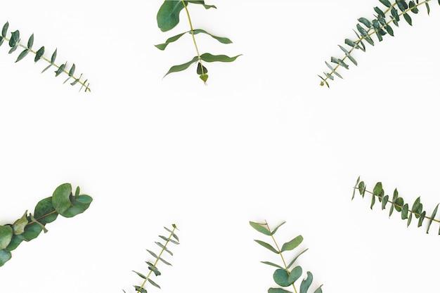 Feuilles d'eucalyptus sur fond blanc. motif composé de branches d'eualyptus. mise à plat, vue de dessus, espace copie